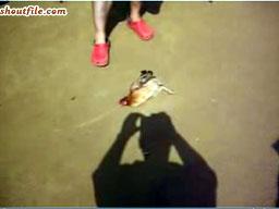 Jak zahipnotyzować kurczaka?