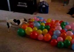 74 balony w 54 sekund