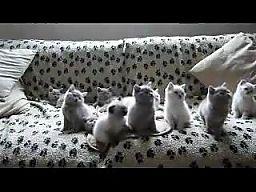 Techno koty