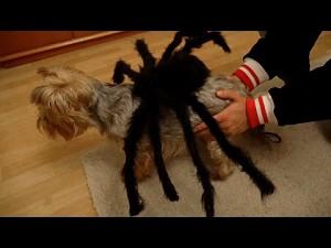 Oczekiwania kontra rzeczywistość w czasie Halloween