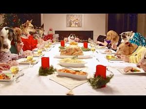 Wielka świąteczna wyżerka psów (i kota)