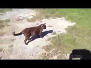 Pomóc ci kocie? No to pomogę