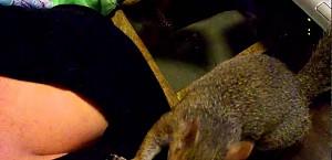 Gdzie wiewiórka chowa orzeszki?