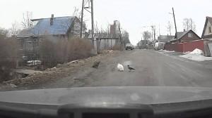 W Rosji są bardzo cierpliwe koty