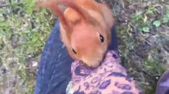 Dziwna wiewiórka w Łazienkach