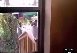 Co ten kot?