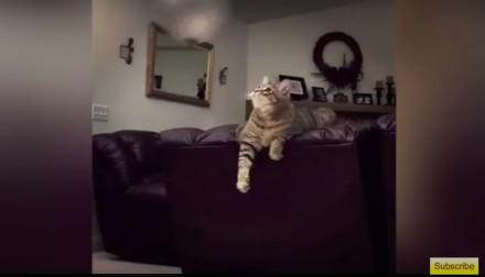 Kot bawi się balonem i dokonuje niemożliwego