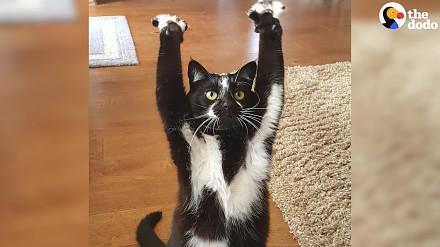 Ten kotek lubi podnosić łapki. To wystarczyło, by internet oszalał
