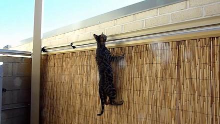 Zamontuj to, aby kot nie uciekł z podwórka