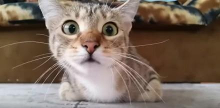 Reakcja kota na horror