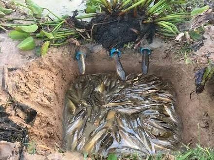 Pomysłowa kambodżańska pułapka na ryby