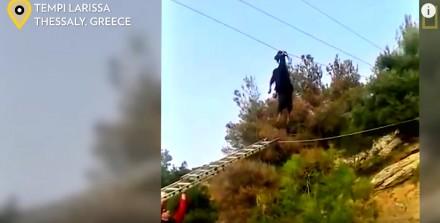 Na pochyłe druty wszystkie kozy skaczą