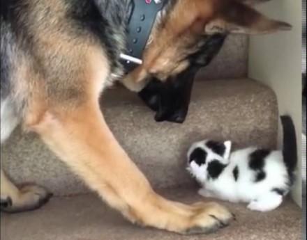 Pies pomaga kociakowi wejść po schodach