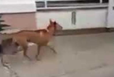 Pies wracający do domu po tygodniu w pracy