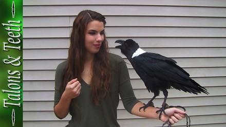 Ładna pani prezentuje czarnego ptaka
