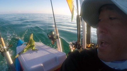 Iguana uratowana przez wędkarza z oceanu 6 kilometrów od brzegu