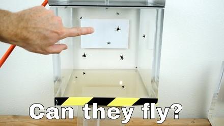 Czy muchy mogą latać w komorze próżniowej?