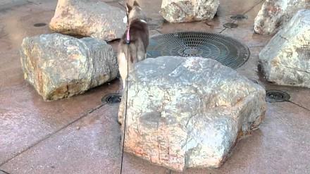 Husky i mokra niespodzianka w fontannie
