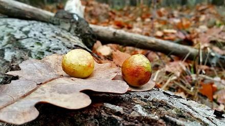 Bojownik ujawnia leśne ciekawostki - galas