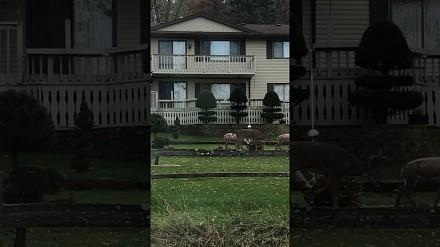 Montowanie atrap łani w ogródkach powinno być karalne