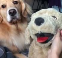 Jak sprawdzić, czy pies jest zazdrosny?