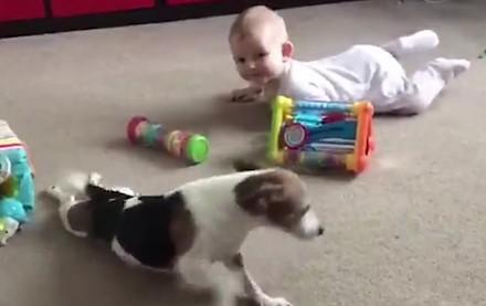 Terrier uczy bobasa raczkować