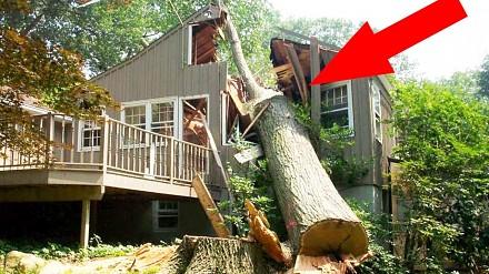 Ścinam drzewo - kompilacja porażek