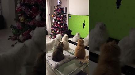 Koty zostały zahipnotyzowane