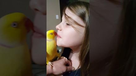 Bardzo miłe pożegnanie przed snem w wykonaniu papużki
