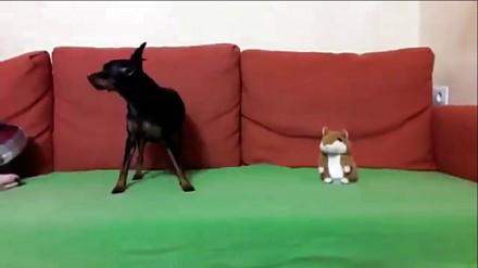 Wyszczekana zabawka trolluje psa