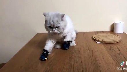 Koteł mordulec w bokserskich rękawicach