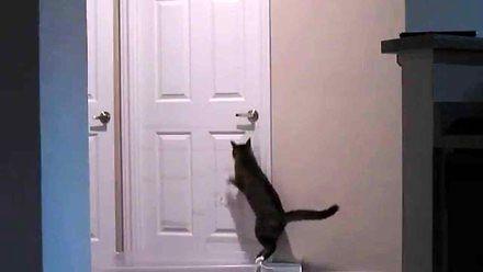 Zastawili wodną pułapkę na kota