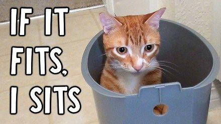 Dla tych kotów każde miejsce jest dobre do siedzenia