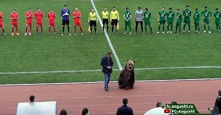 Niedźwiedź na meczu piłki nożnej w Rosji