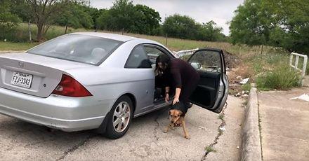 Porzucają psy na końcu drogi i uciekają