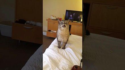 Kiedy kotu zbiera się na kichanie