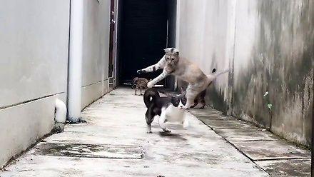 Turbokoteł, czyli kot jak z filmów akcji
