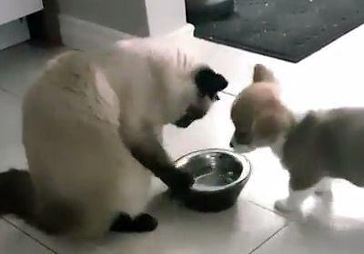 Koteł i pieseł w jednym żyli domu