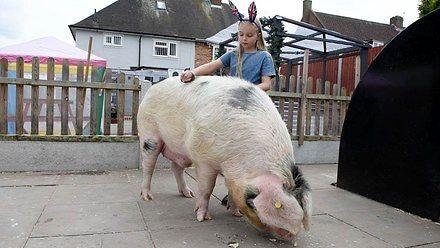 Nie kupuj dziecku psa czy kota. Kup mu świnię!