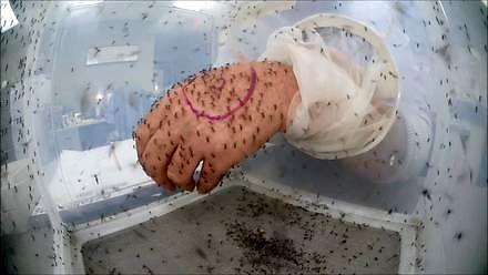 Jak się robi testy środków na komary?