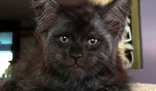 Ten kot mnie przeraża