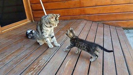 Kocia mama czyści kociaka na siłę