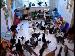 130 kotów
