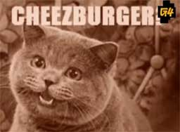 Historia LOLcats