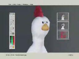 Ewolucja kurczaka