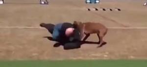 Policyjne psy w akcji