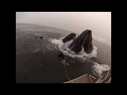 Dwa wieloryby prawie zjadają nurków