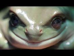 Cała prawda o żabusiach