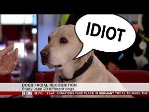 Pies w studiu BBC News