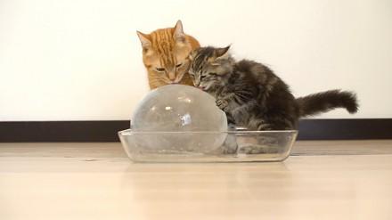 10 kotów i lodowa kulka